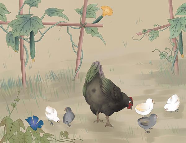 发酵床养鸡的优点以及注意事项