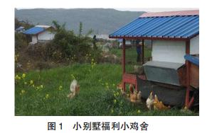 小窍门小规模简易技术养鸡精准脱贫