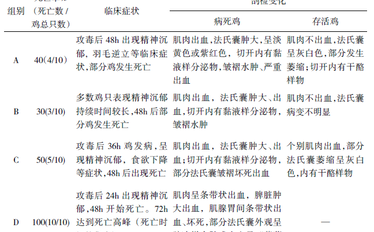 鸡传染性法氏囊病病毒不同攻毒方法致病效果试验