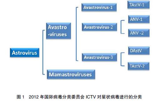 禽星状病毒感染的流行特点