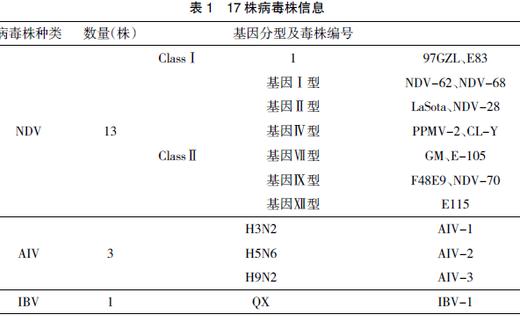 检测新城疫病毒荧光定量PCR引物的综合评估