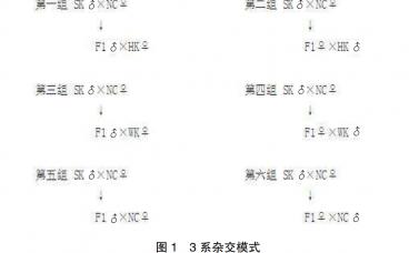 """""""天翔""""肉鸽专门化品系培育及杂交配套研究"""