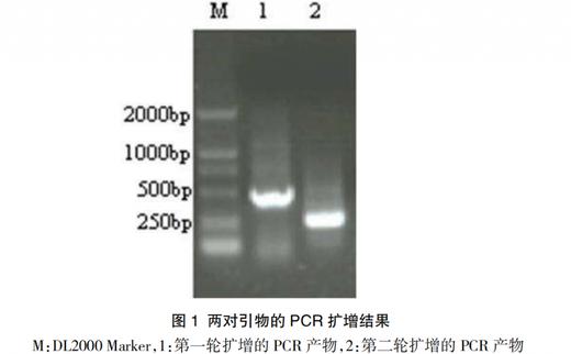 鸭疫里默氏杆菌套式PCR检测方法的建立和应用